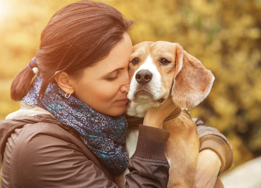 dogs careers for introverts with anxiety