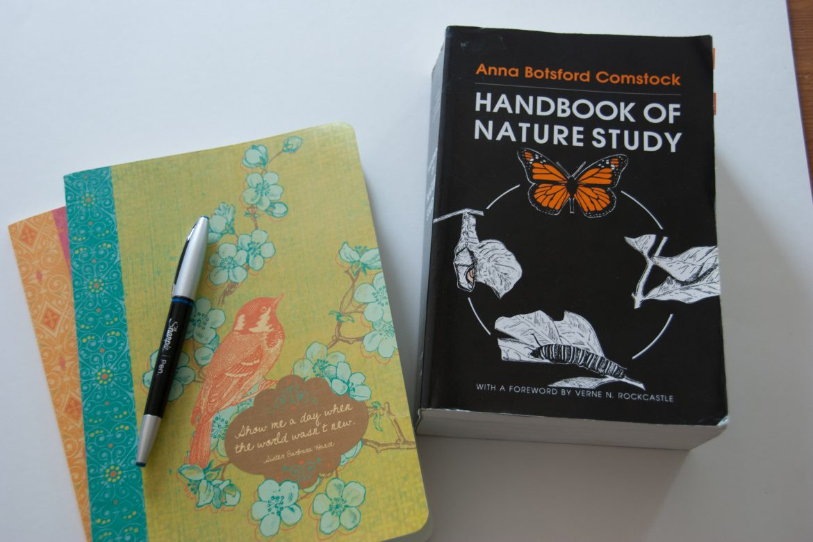Getting Started (Again) With Nature Notebooks