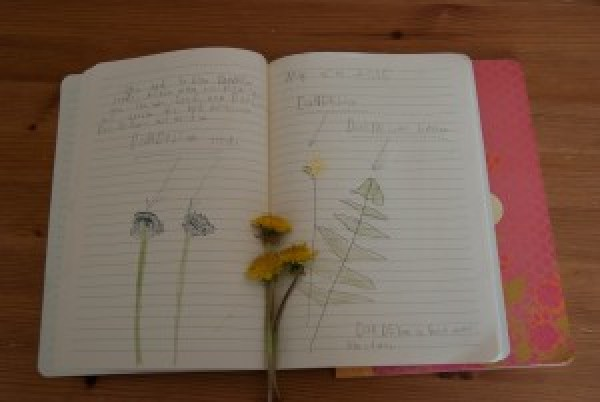 Things to do with your kids this summer: Start a nature notebook!