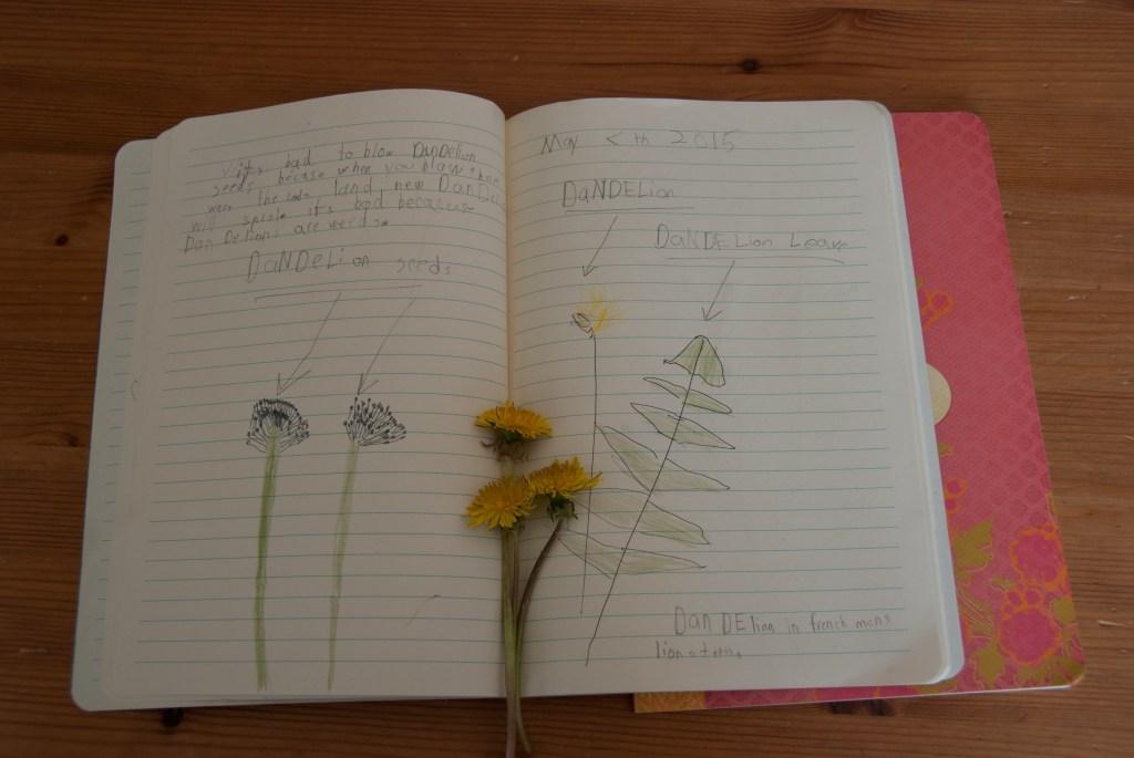Big Sister's dandelion entry