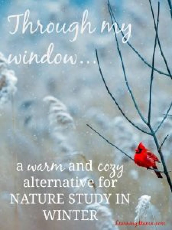 Keep warm this winter by doing nature study through your window!