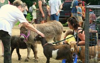 Donkey and lamb and goats