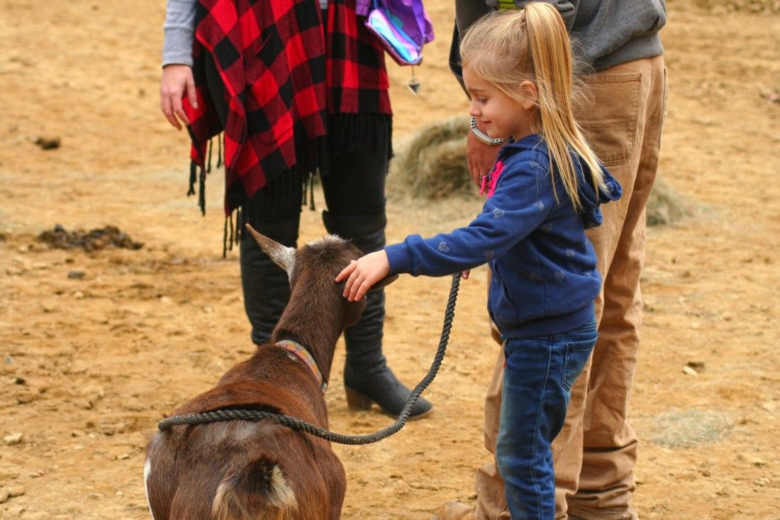 Petting Dixie the goat