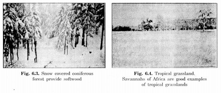 NCERT Solutions for Class 7 Social Science Geography Chapter 6 Natural Vegetation and Wild Life 2