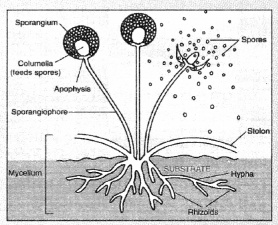 How do Organisms Reproduce Class 10 Notes Science Chapter 8 4