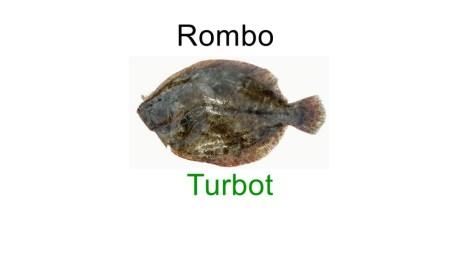 Turbot in italian language