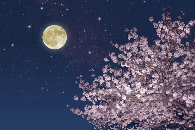 SpringMoonBlossoms_1500
