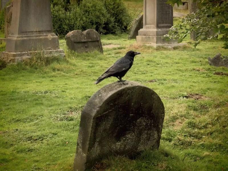 Corbeau sur pierre tombale
