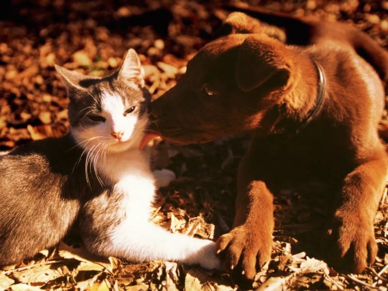 Chat et chien câlin
