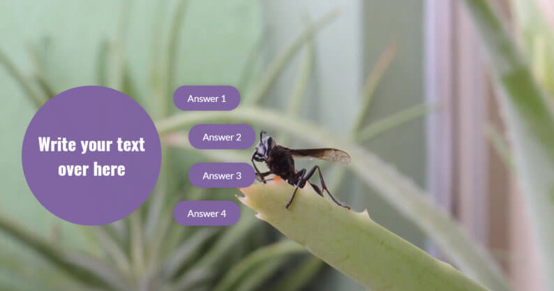 Questions in Interactive Videos: Why they are Important