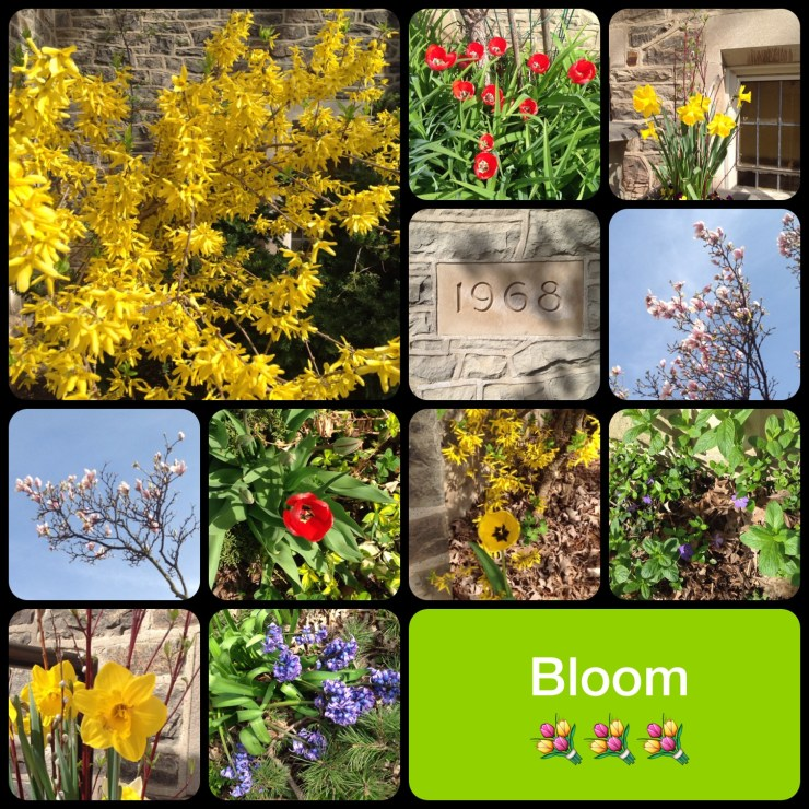 Blooming at Leaside United Church