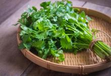 Photo of Coriander Cilantro The Secret !