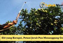 Petani Jeruk Indonesia