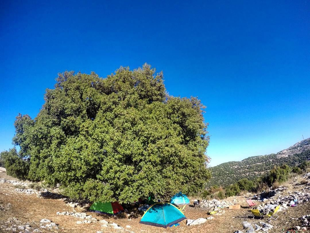 Sunday Camping Camp Hike Hiking Gianttree Tree Tent