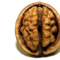 Gehirnspende: Ein Geschenk für die Zukunft oder wohin mit meinem Gehirn wenn ich ihn nicht mehr brauche