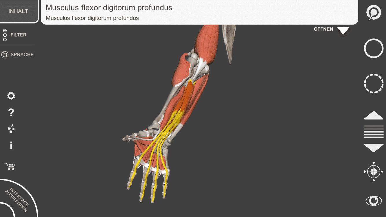 Großartig Urogenitaltrakt Anatomie Und Physiologie Bilder ...