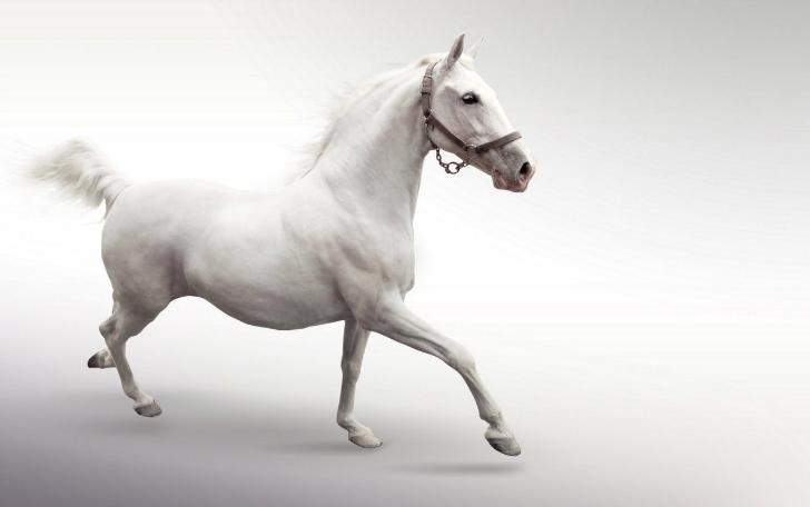 beyaz rengin anlamı  Renklerin Anlamları ve Psikolojik Etkileri beyaz