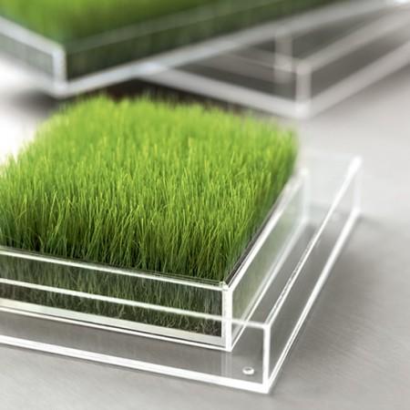 carré de verdure Chlorophylle cristal