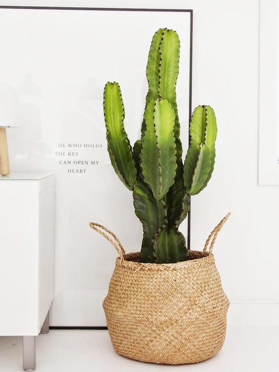 Pot Plante En Bois plante verte d'intérieur, pot noir et bois naturel pour un