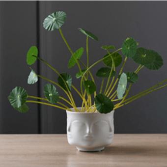 petit cache pot tete blanc plante verte