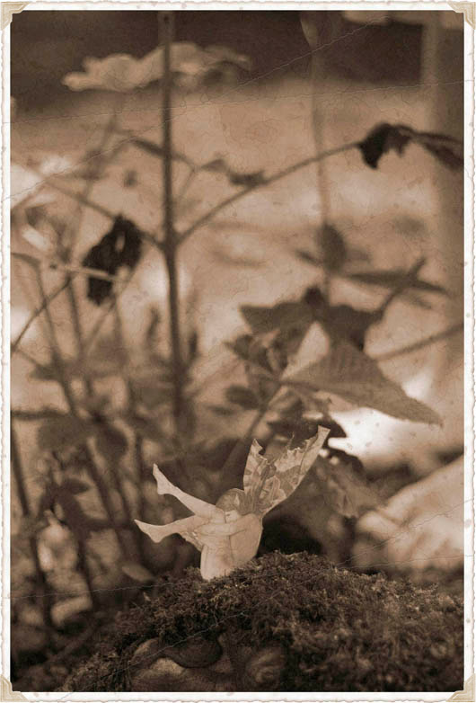 fairy-old-photography