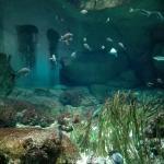 Visite en famille à l'Aquarium de Paris