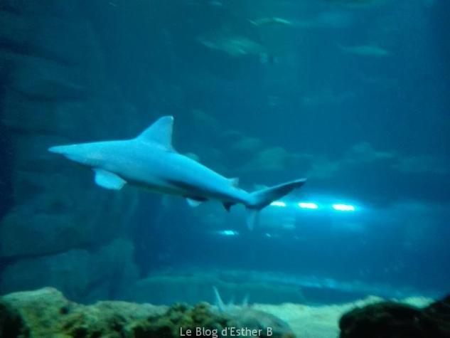 aquarium_de_paris_requin
