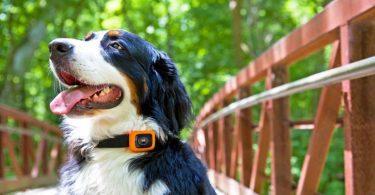 Scout Traks tracker surveiller votre chien Motorola