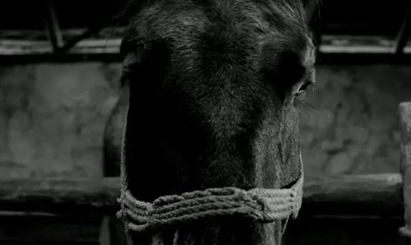 Photo du film LE CHEVAL DE TURIN
