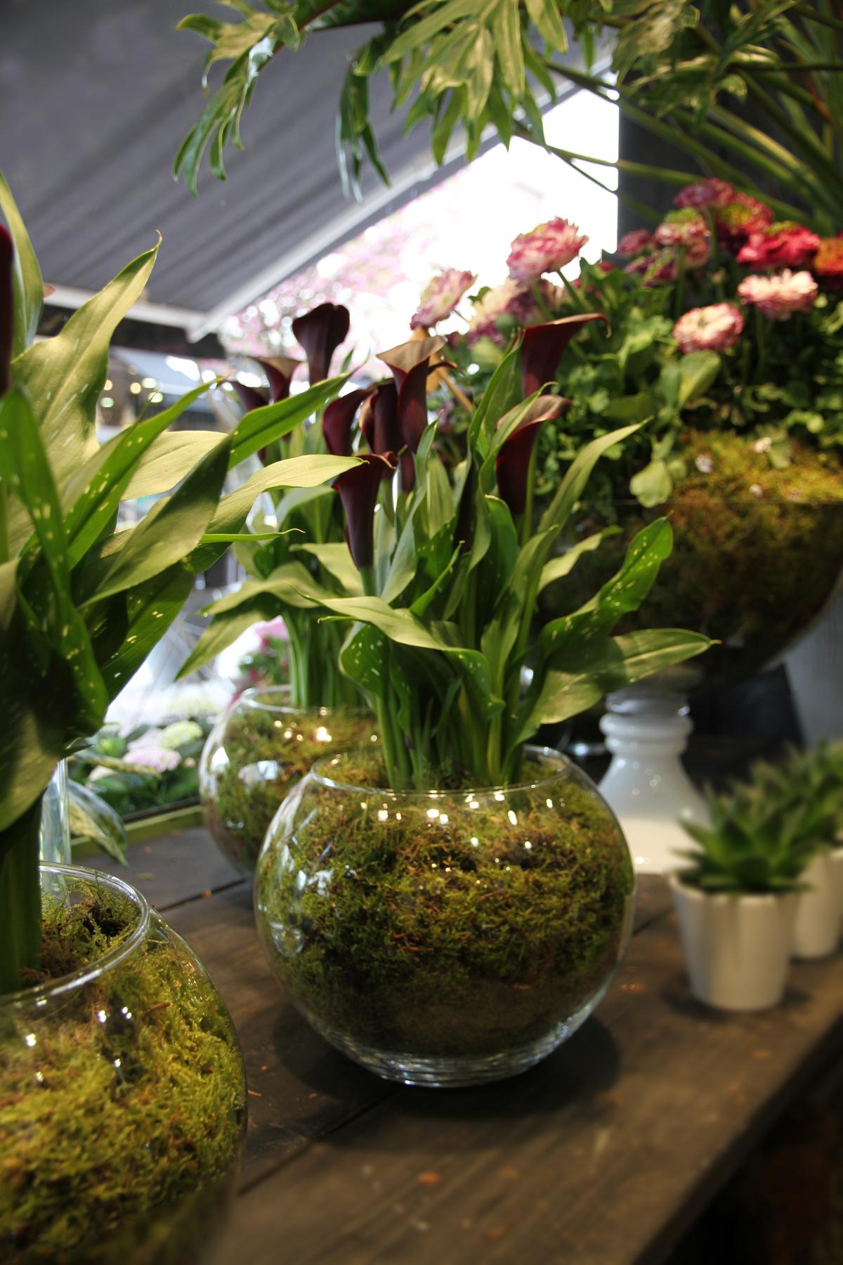 les fleurs du week end le buzz de rouen. Black Bedroom Furniture Sets. Home Design Ideas