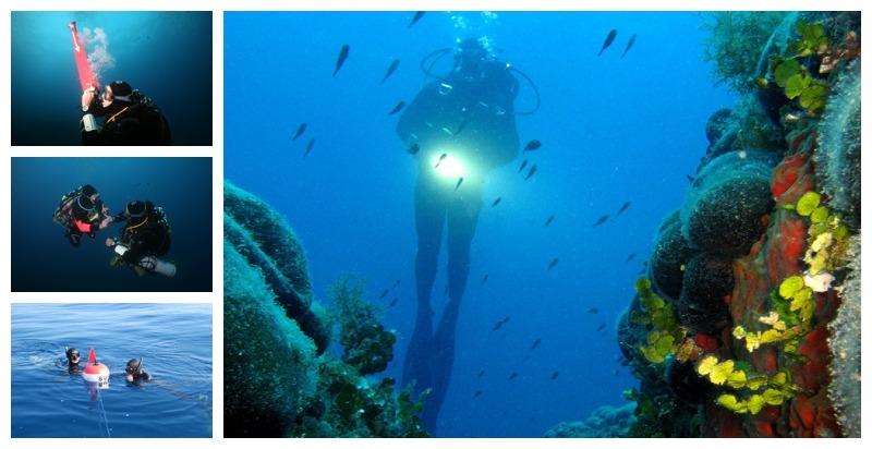 Immersioni, Snorkeling, Apnea e Corsi Sub