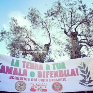 Ulivi - Xylella - Salento - #difendiamogliulivi