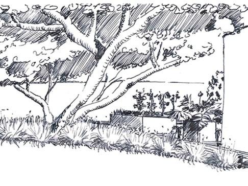 02-esquisse-perspective-miseenvaleur-arbre