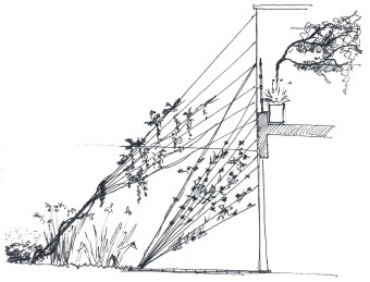 04-esquisse-detail-créer-jardin