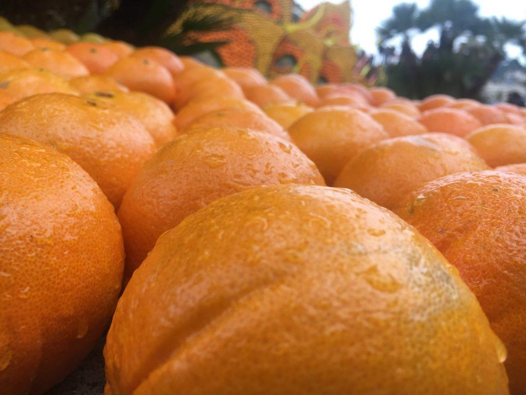 L'orange ; alliée de choix pour le Citron de Menton.