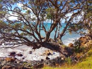 Waipu coastal walk - northland