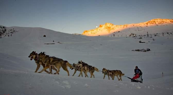 Cherche handler/musher en Auvergne