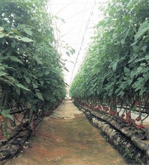 innovation_dakhla_agriculture_019.jpg