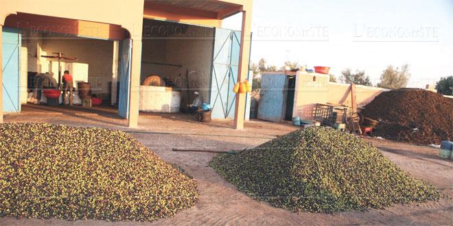 olives-021.jpg