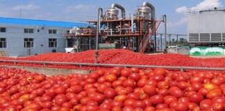 tomates saisonnières - l'économiste maghrebin