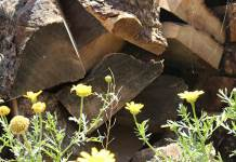 Sidi Bouzid bois d'olivier
