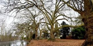 """Andras Zlinsky : Les arbres auraient un """"rythme cardiaque"""""""