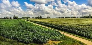 investissements agricoles