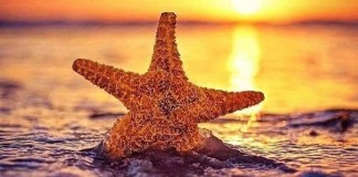 Starfish 2030