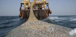pêche illicite