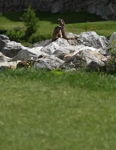 Cervinia Golf Club