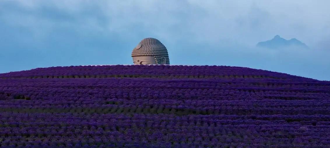 Tadao Ando: la collina del Buddah di Sapporo si tinge di lavanda