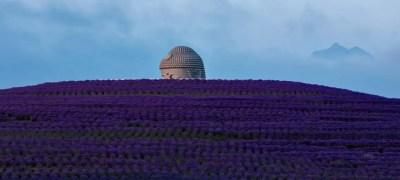 Read more about the article Tadao Ando: la collina del Buddah di Sapporo si tinge di lavanda
