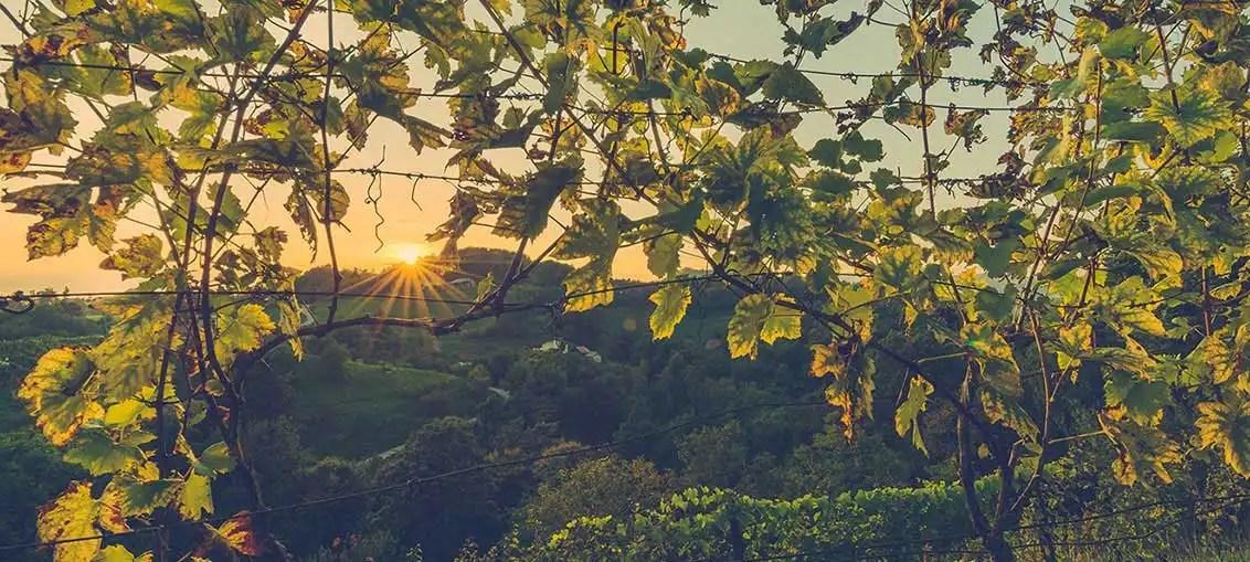Spagna: un tour enologico alla scoperta del vino spagnolo