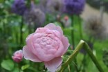 heller-garden-fiori (3)